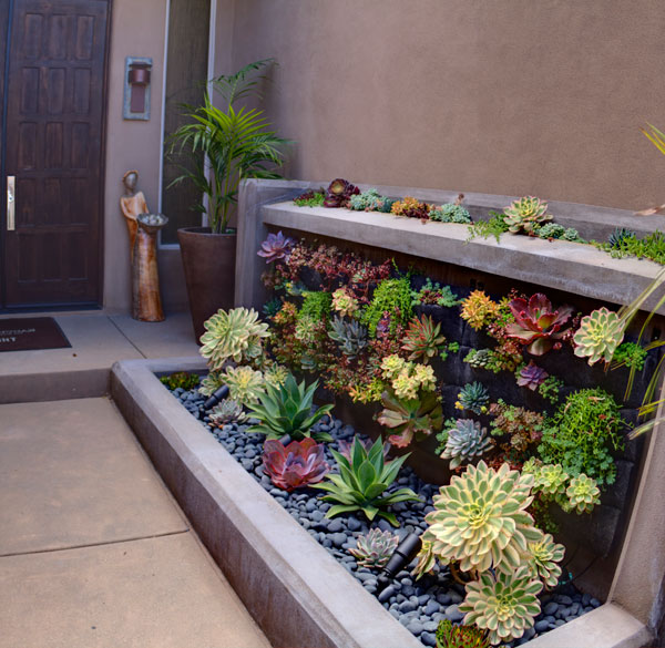 Living Wall Installation In San Diego, CA